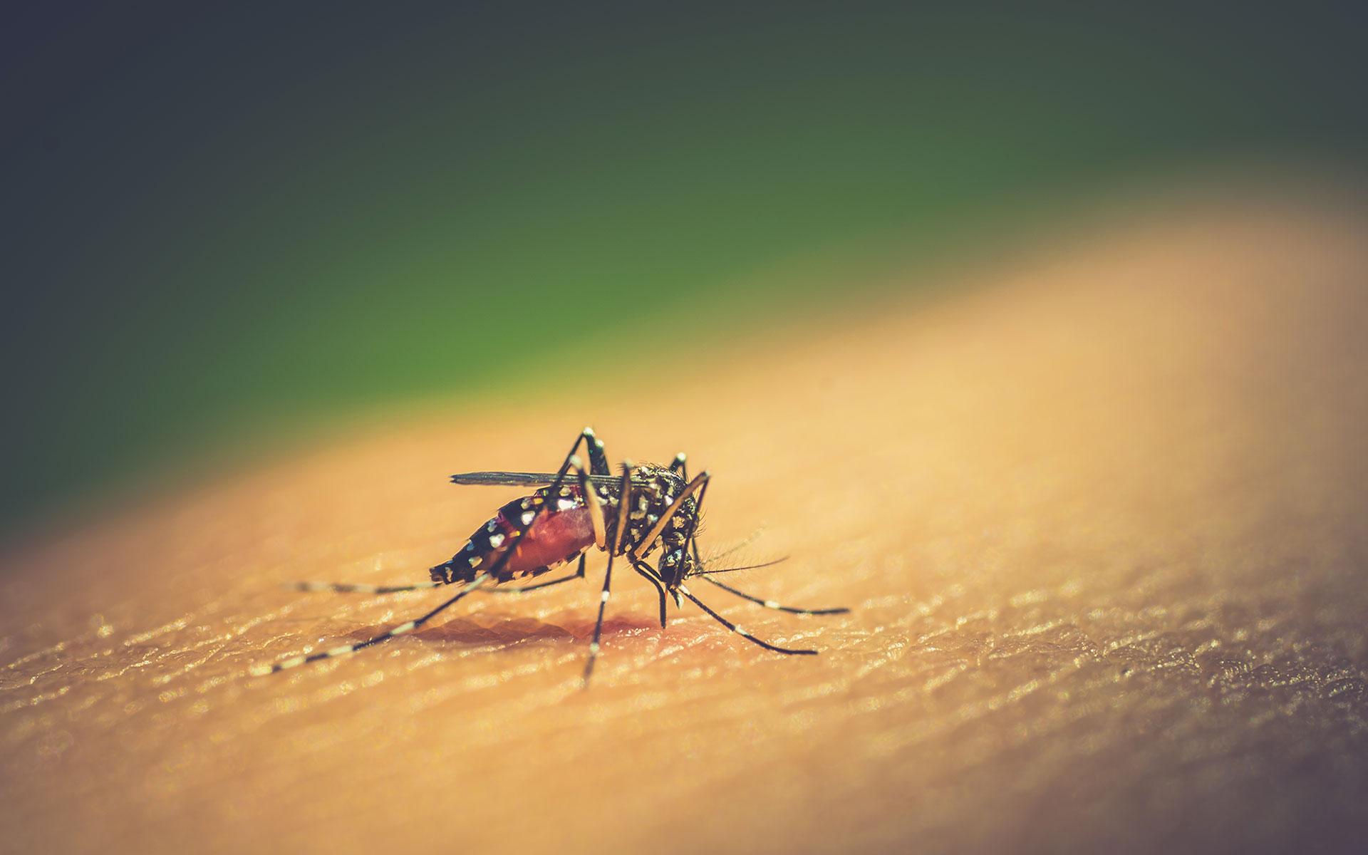 prodotti contro le zanzare
